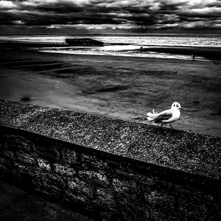Seagull-Arromanches-les-Bains_Gold Beach