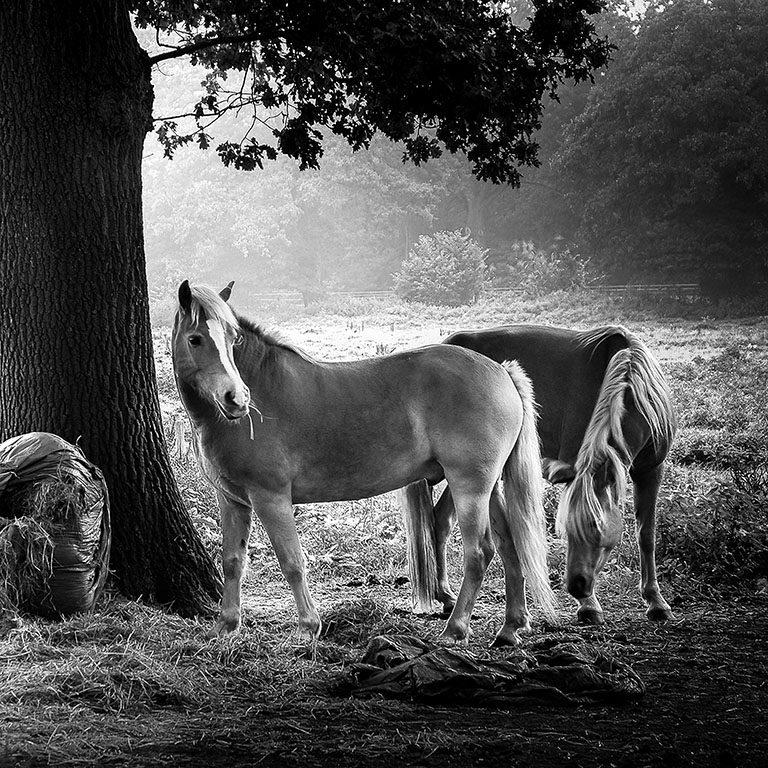 Horses Twekkelo, Netherlands